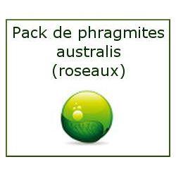 Pack de phragmites (roseaux) N°1