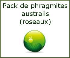Pack de phragmites (roseaux)