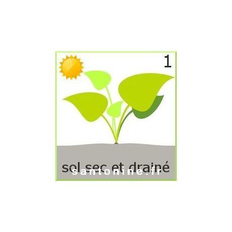 plantes vivaces pour bordure de bassin au soleil et sol sec. Black Bedroom Furniture Sets. Home Design Ideas
