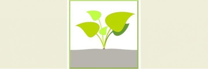 Plantes pour sol sec