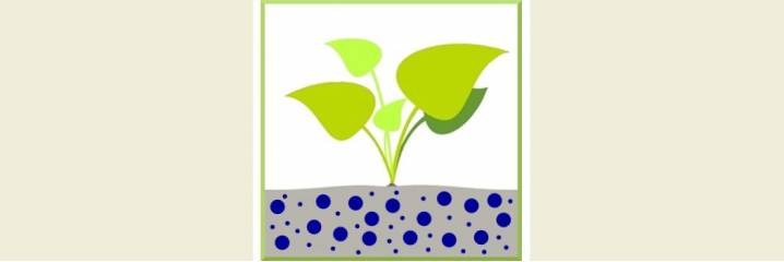 Plantes pour sol humide
