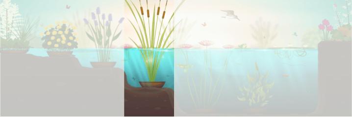 Sous 0 à 50 cm d'eau