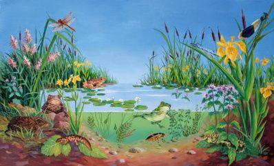 les animaux qui vivent dans l'eau