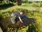 installation des plantes sous l'eau dans le bassin