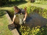 Installation du nénuphar dans le bassin