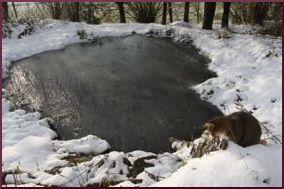 bassin elé