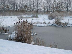 l'hiver et le bassin
