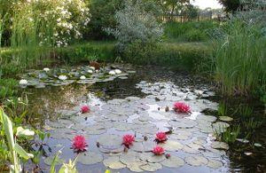 le bassin au printemps