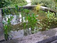 Un bassin nettoyé