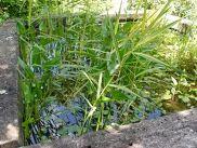 Un bassin trop végétalisé