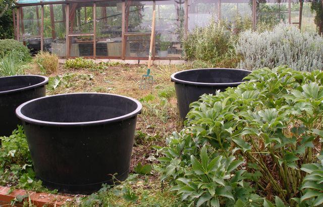 Am nagement d 39 un mini bassin santonine plantes aquatiques - Amenagement bassin aquatique ...