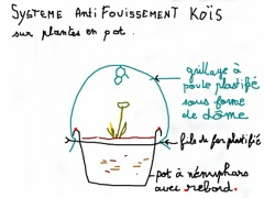 cage-protection des plantes