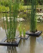 radeaux de plantes