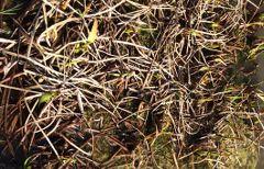 photo d'une plante émergente en automne