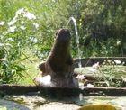 l'eau rejetée par une grenouille