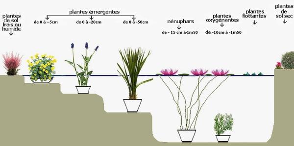 Santonine - pépinière de plantes aquatiques