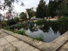 Une piscine transformée en bassin