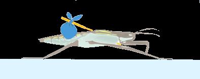 la galéruque passe l'hiver sur le bord du bassin