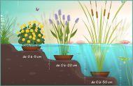 Les plantes émergentes