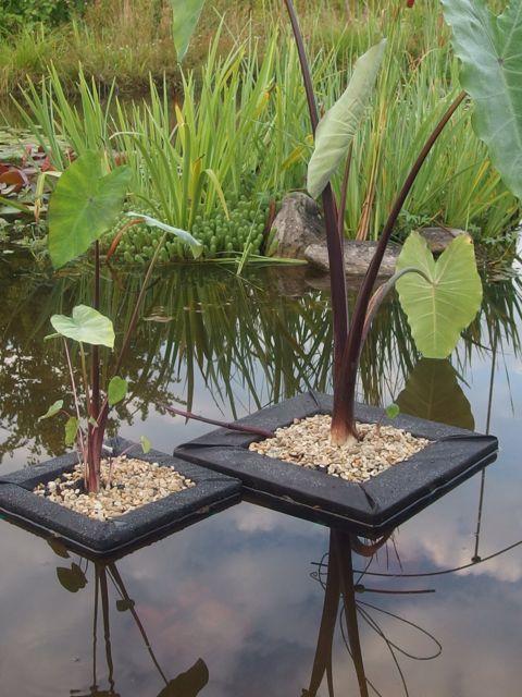 Un esth tique radeau de 35cm x 35cm pour plantes aquatiques - Noms de plantes aquatiques ...